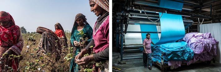 PAQUISTÃO Esquerda: Após o trigo, o algodão ocupa mais terra do que qualquer outra colheita no Paquistão, ...