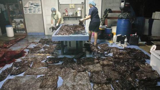 Mais de 7 Quilos de Lixo Plástico Mataram Esta Baleia-Piloto