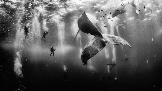 Como Vencer um Concurso de Fotografia Mudou a Vida deste Fotógrafo
