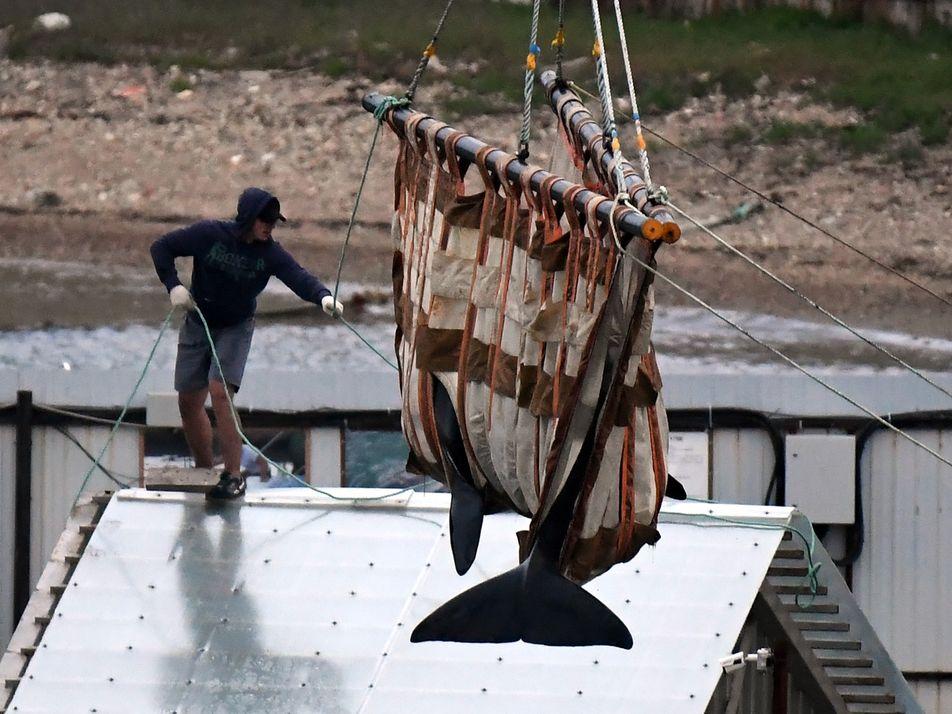 Libertação de Baleias da Infame 'Prisão de Baleias' Russa