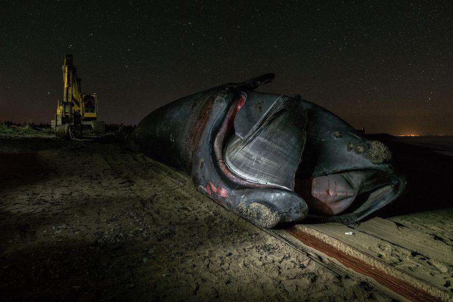 """""""Wolverine"""" sobreviveu a uma colisão com um navio e a três envolvimentos com cordas de pesca, ..."""