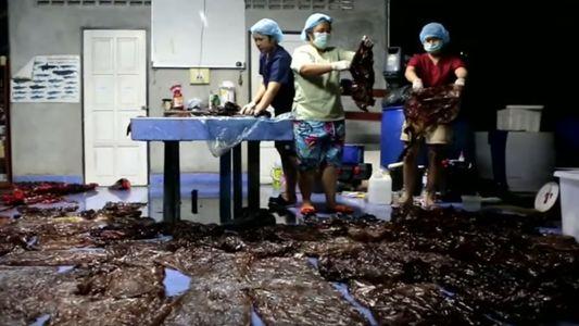 Como é que esta Baleia Acumulou 7 Quilos de Plástico no Estômago?