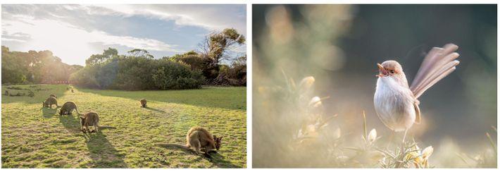 Esquerda: Os cangurus-de-pescoço-vermelho encontram refúgio no Parque Nacional Narawntapu, uma reserva de pântanos, lagoas e dunas ...