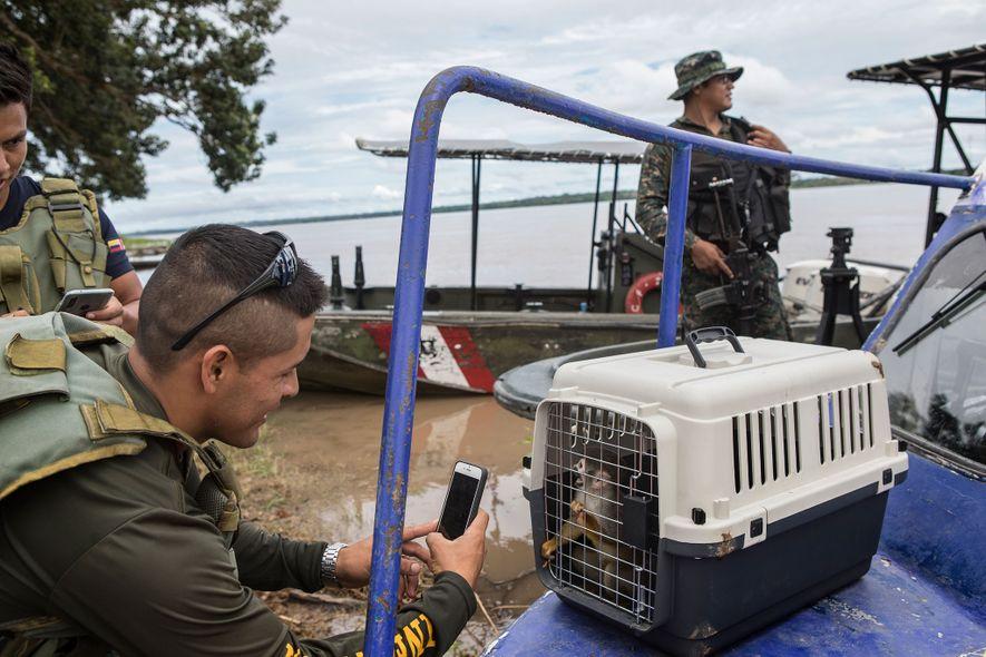 Um oficial da força aérea tira uma foto a um macaco-esquilo resgatado. Os habitantes de Puerto ...