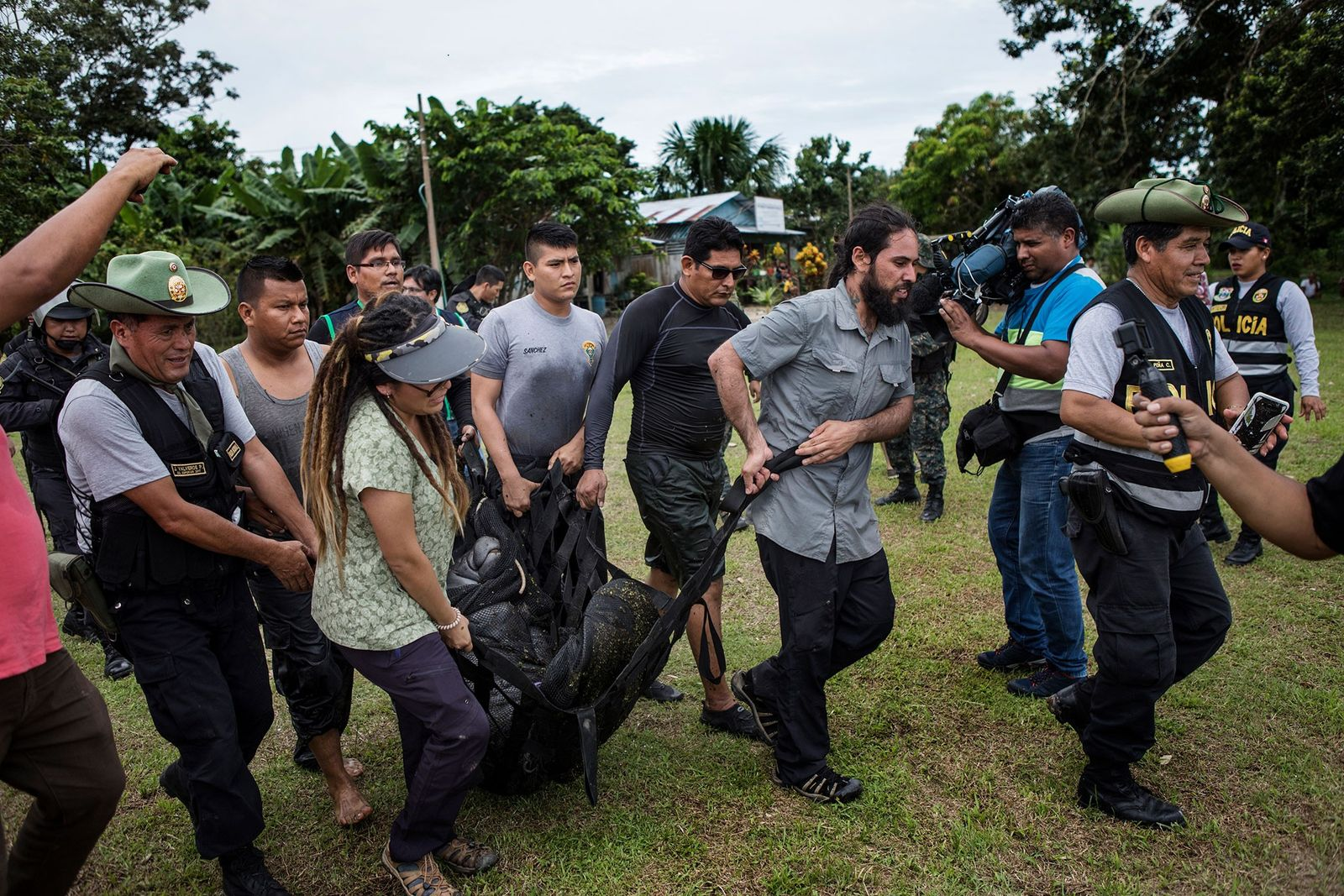 Polícias e veterinários transportam uma manatim para o barco que a aguarda. A manatim era mantida ...