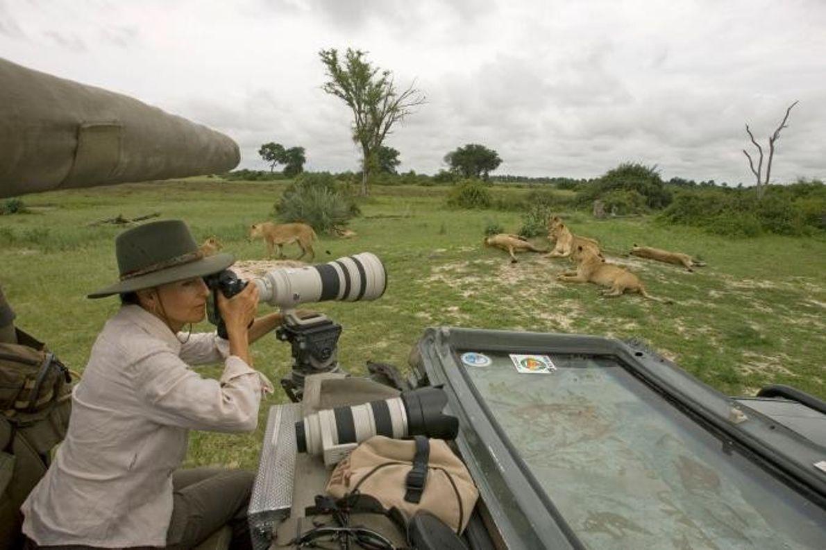 Beverly Joubert fotografa leões nas planícies de Duba.