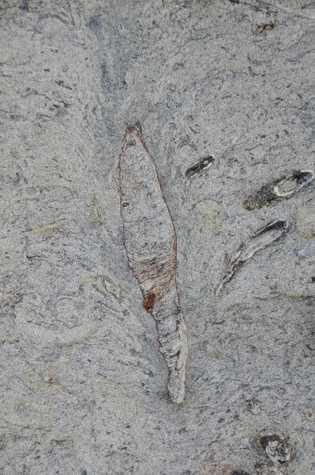 O topo desta toca fossilizada em Taiwan forma uma estrutura colapsada em forma de pena, semelhante ...
