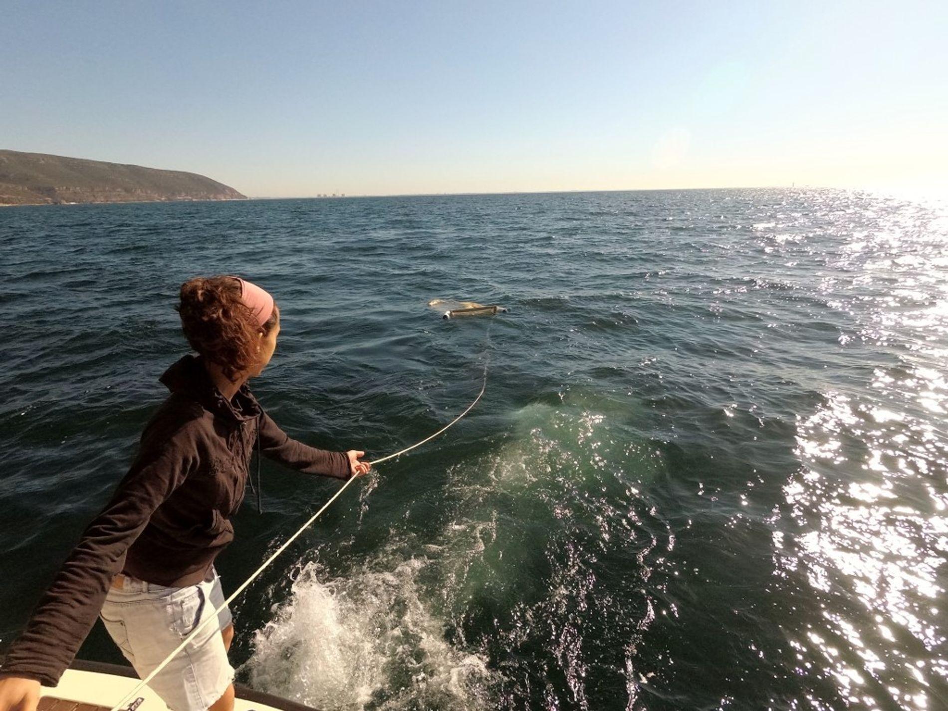 Diana Rodrigues Estuda a Poluição por Microplásticos no Sado e Mar da Arrábida