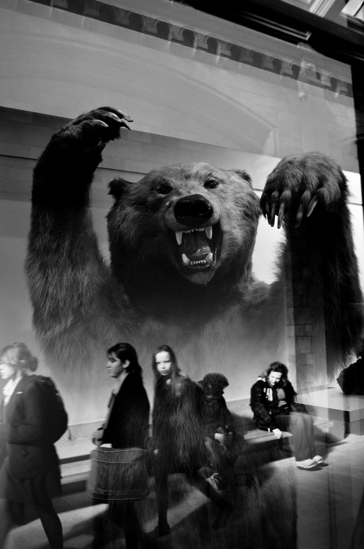 Museu de História Natural, Londres.