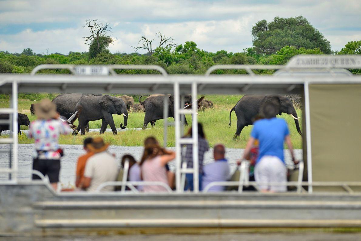 O Zambezi Queen navega no rio Chobe.