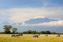 zebras kilimanjaro africa