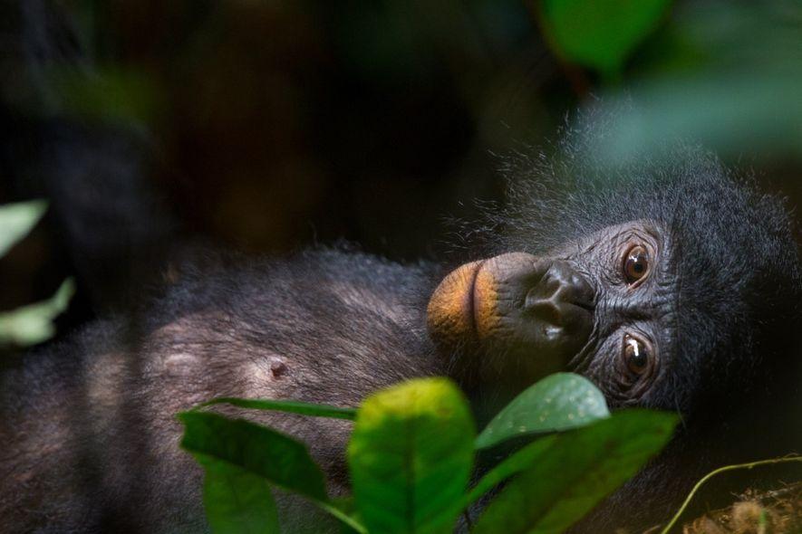 O ecologista tropical Christian Ziegler trabalhou em florestas tropicais em quatro continentes.
